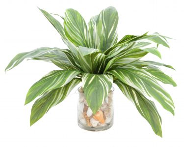 green and white leaved plant