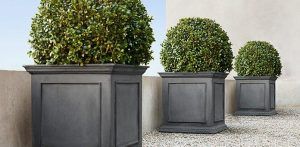 Boxwood Ball Trio